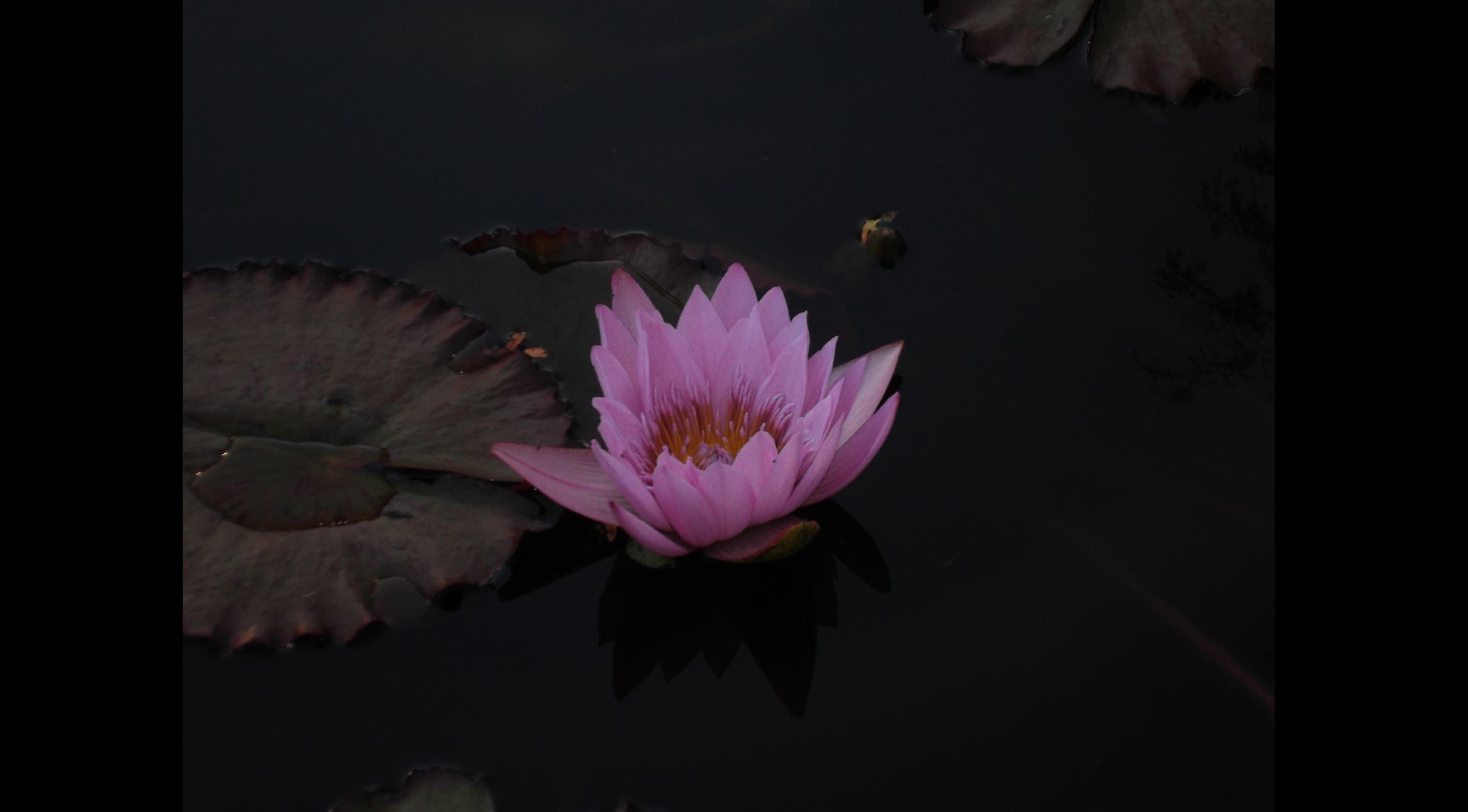 meditating on medea